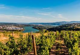 Rhône valley wines