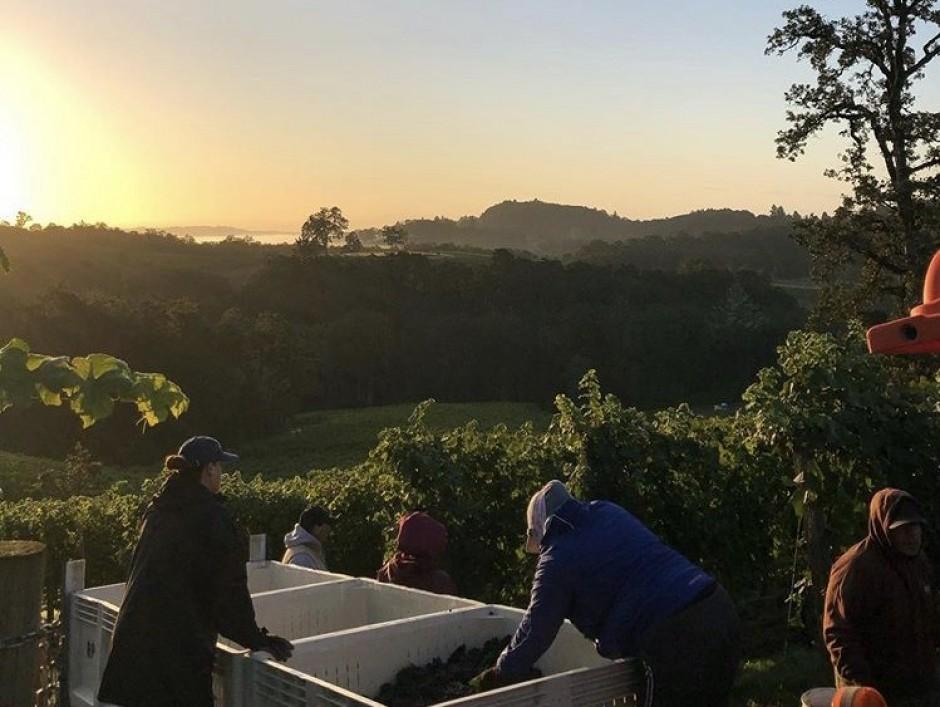 Oregon Winemaking